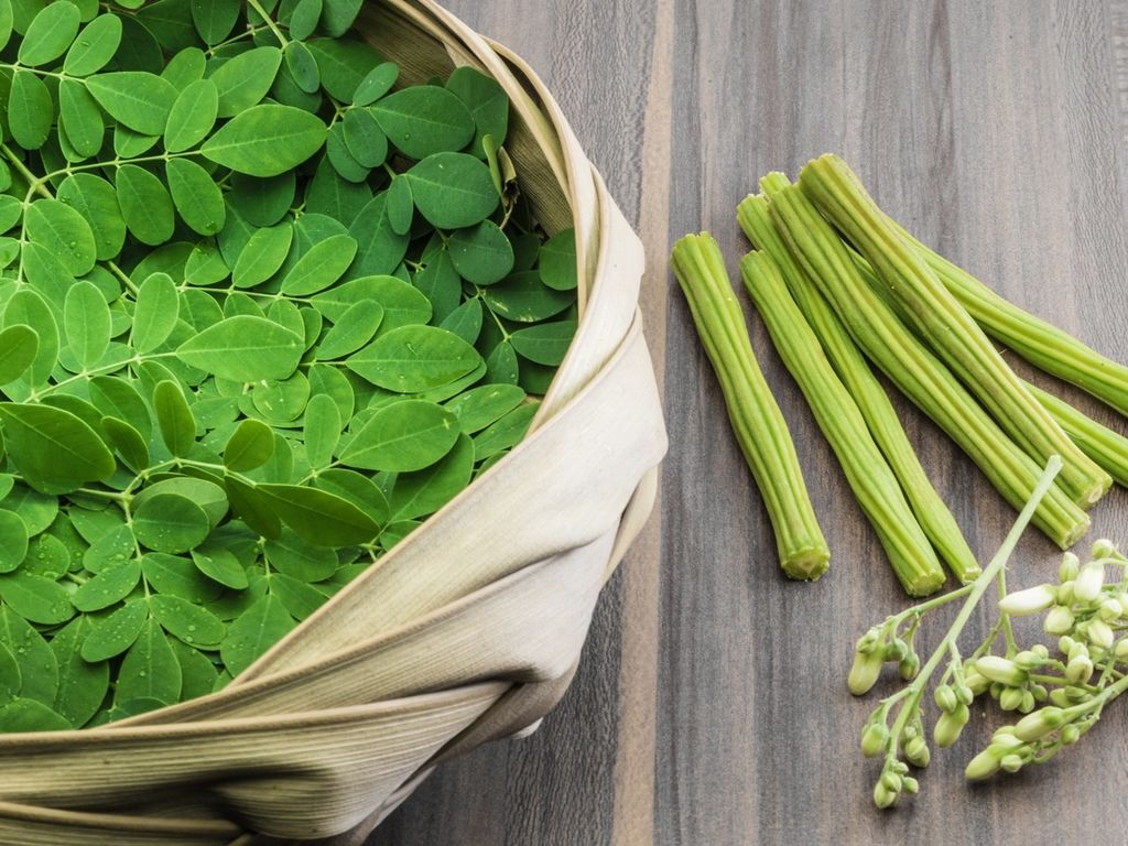 Miraculous Moringa (Drumstick Tree) - The Indian Med