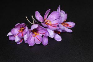 Kungumapoo-Saffron-Benefits