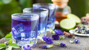 blue-tea-sangu-poo-benefits